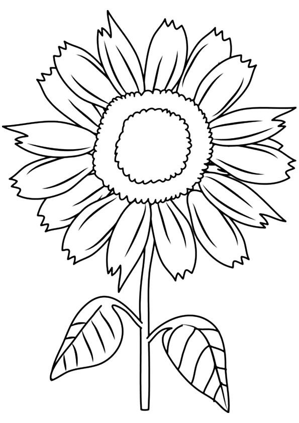 Sunny Smile Sunflower