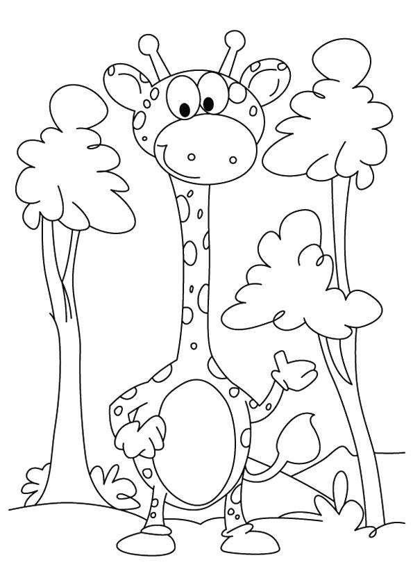 Baby Giraffe Among The Trees
