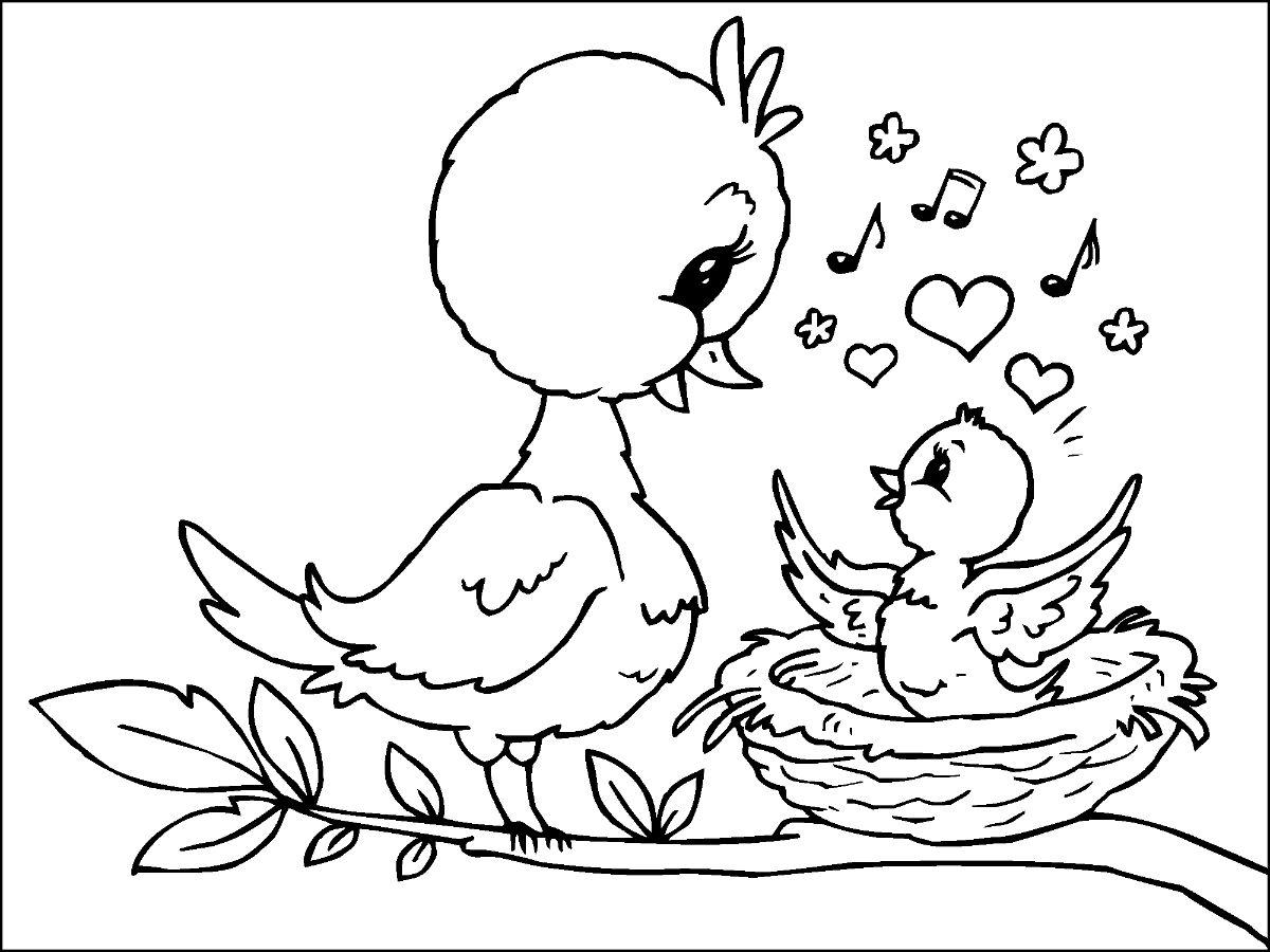Mother Bird And Baby Bird