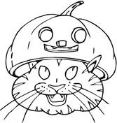 Cat Wearing Pumpkin Hat