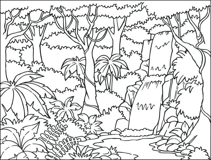 Rainforest Landscape
