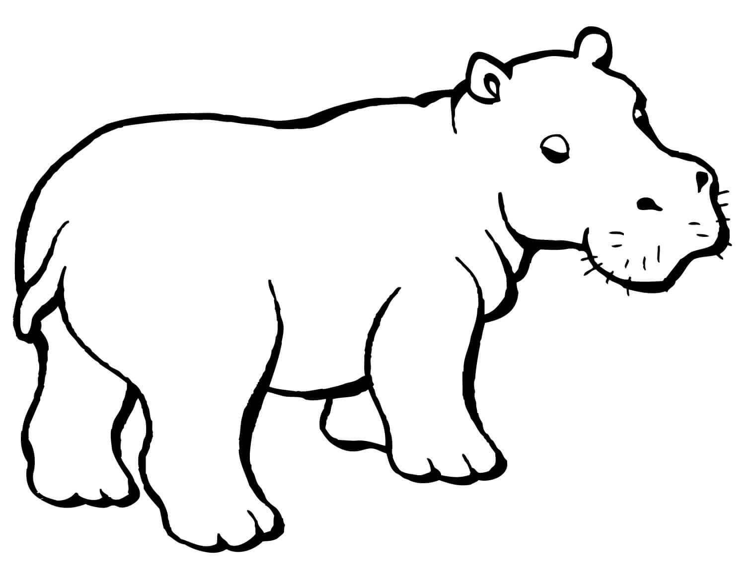 Normal Hippo