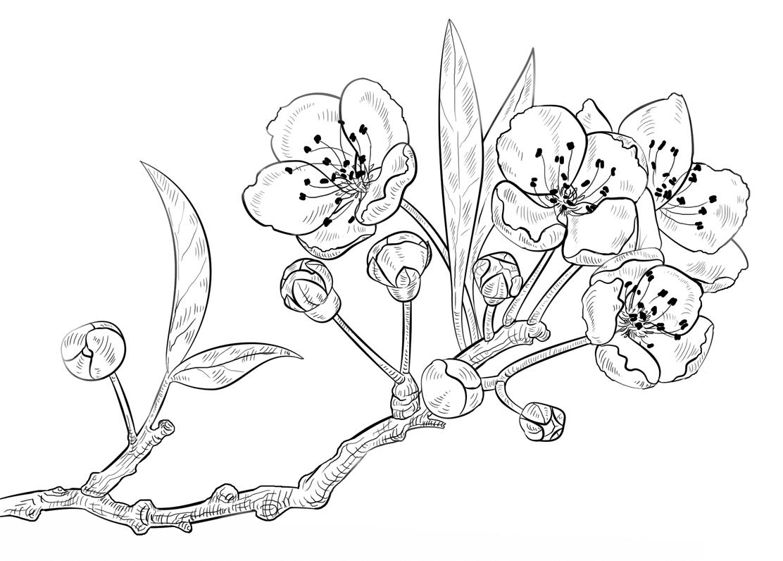 A Branch Of Cherry Blossom