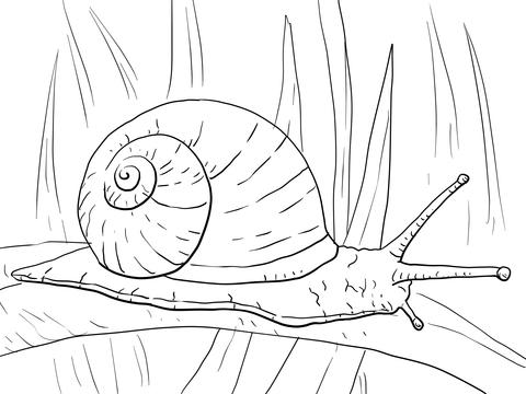 Snail On Long Leaf