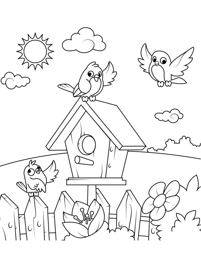 Birds And Their House