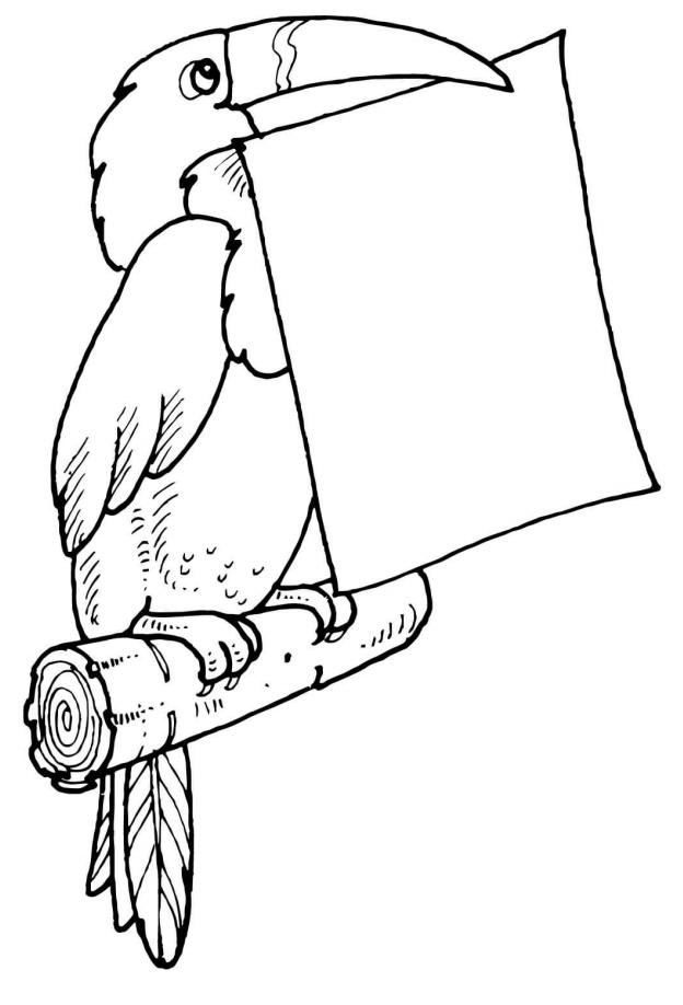 Toucan Holding Letter