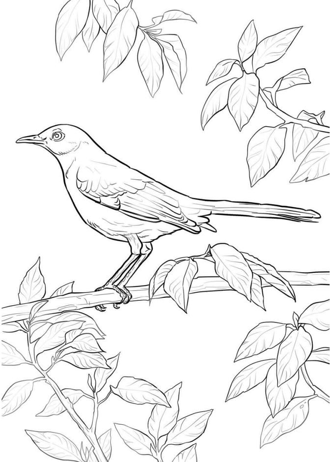 Mockingbird On Branch