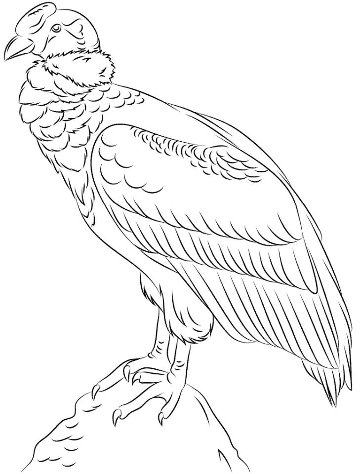 Condor On A Rock