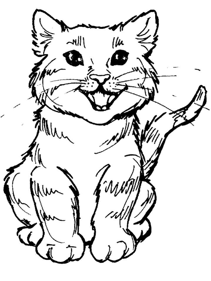Meowing Kitten
