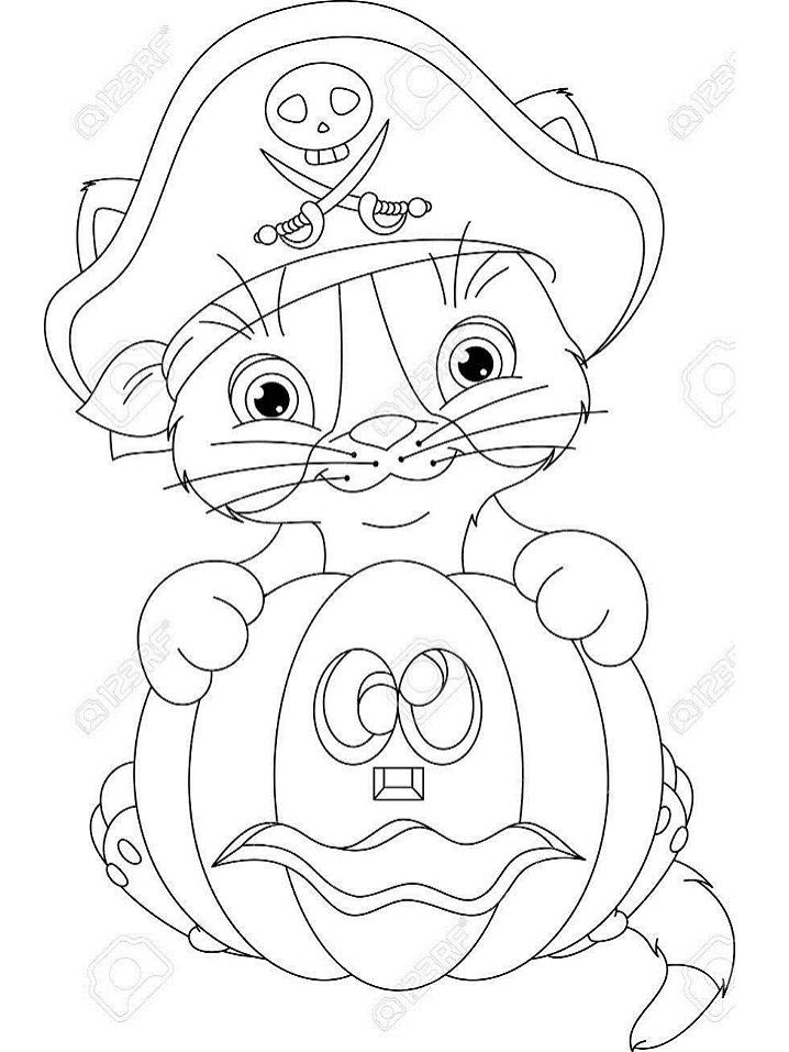Pirate Kitten with Pumpkin