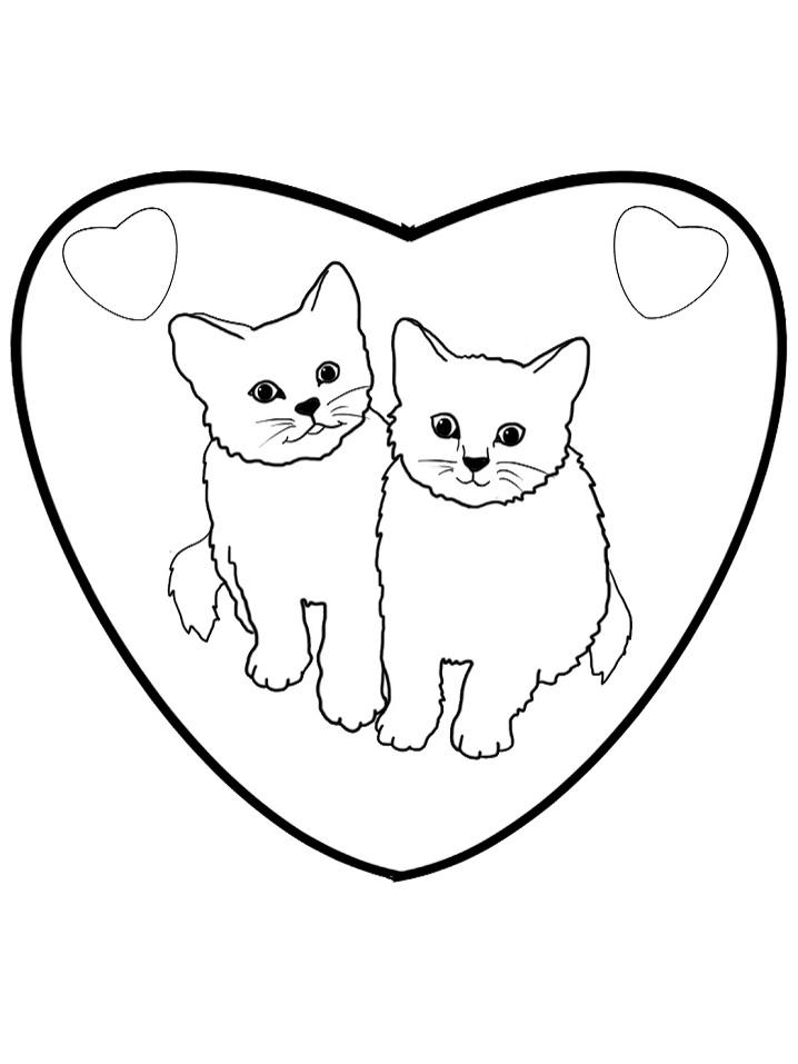 Couple Kitten