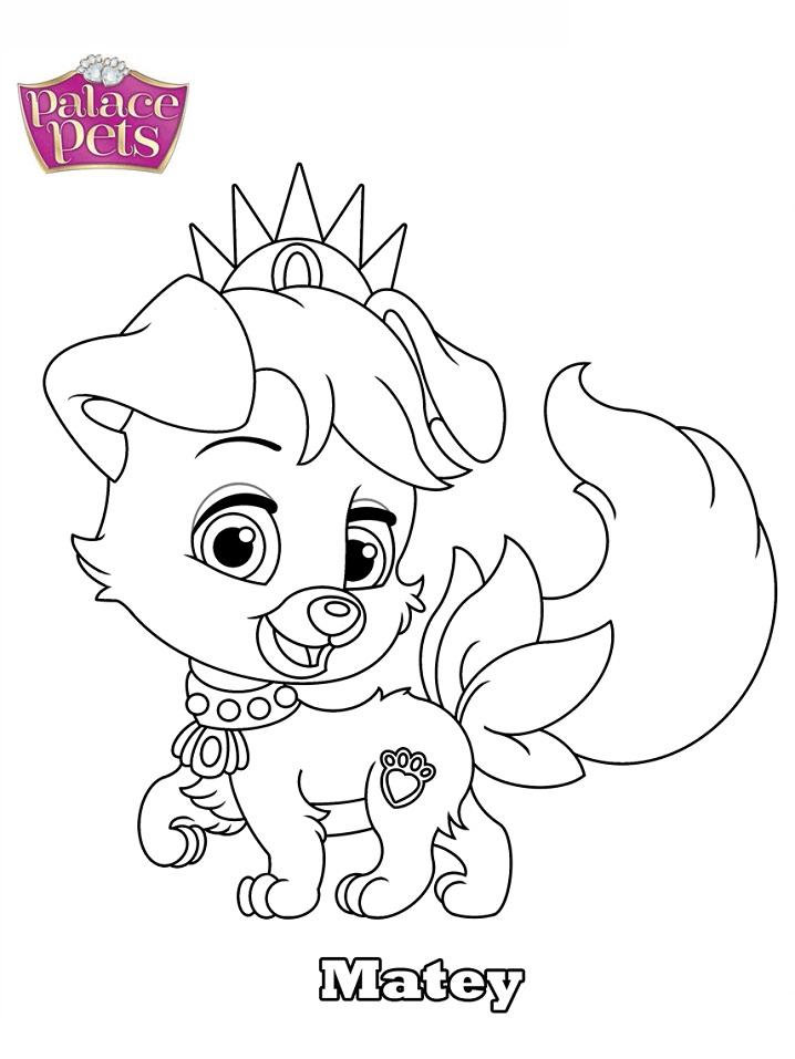 Palace Pets Matey