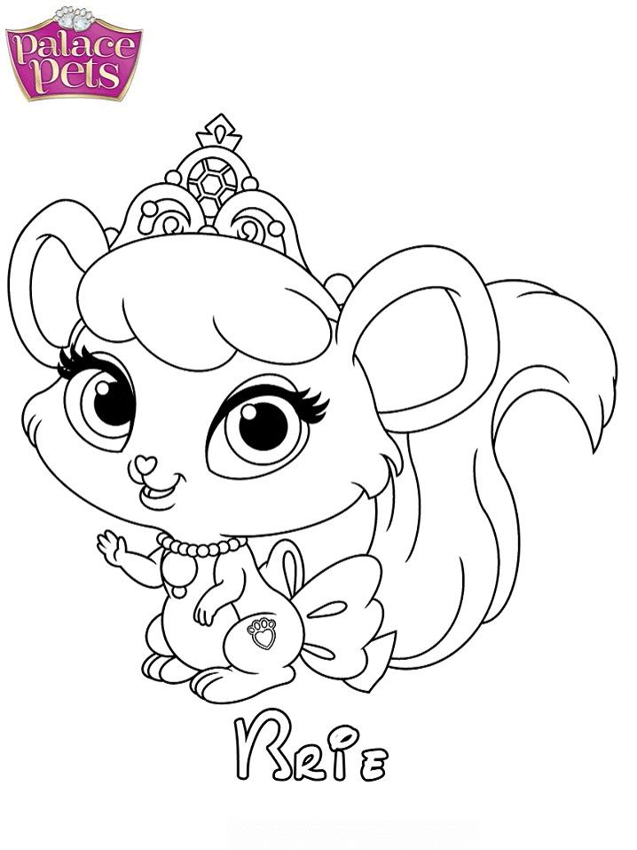 Brie Princess