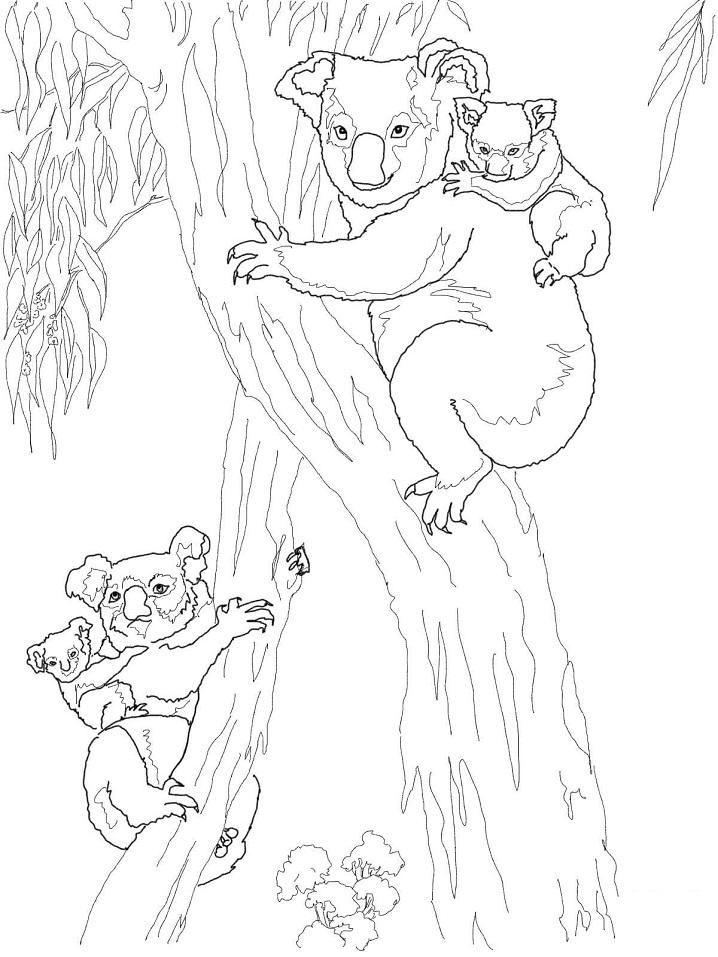 Koala Moms with Babies