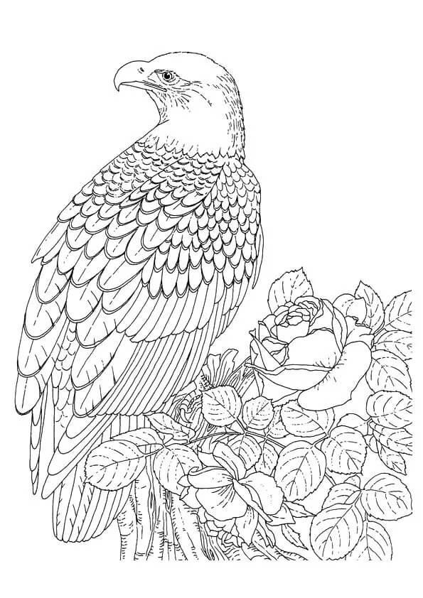 Crescent Serpent Eagle