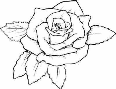 1526135001_rose_a4