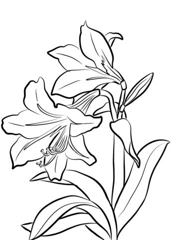 1527065262_amaryllis-coloring-page