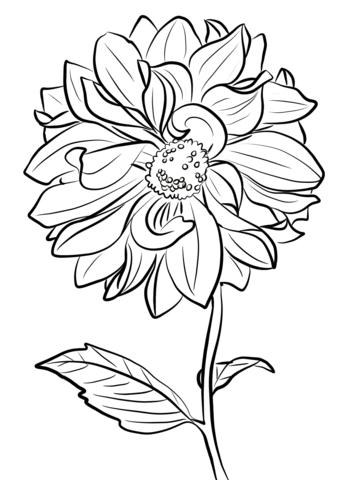 1527066209_dahlia-marguerite-clark-coloring-page