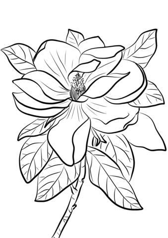 1527069114_magnolia-grandiflora-coloring-page