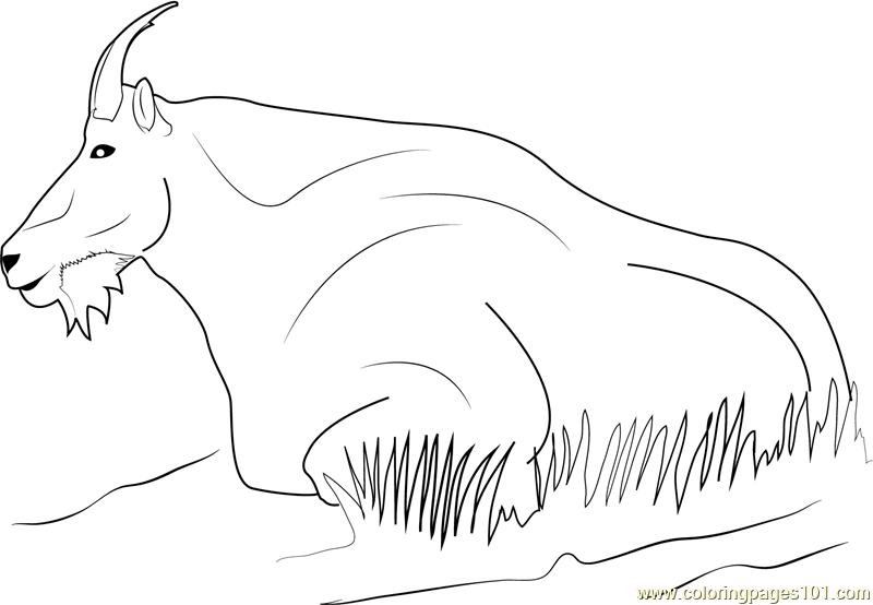 1531880200_mountain-goat-relaxing-a4