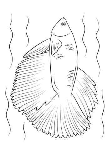 Halfmoon Betta Fish Coloring Page