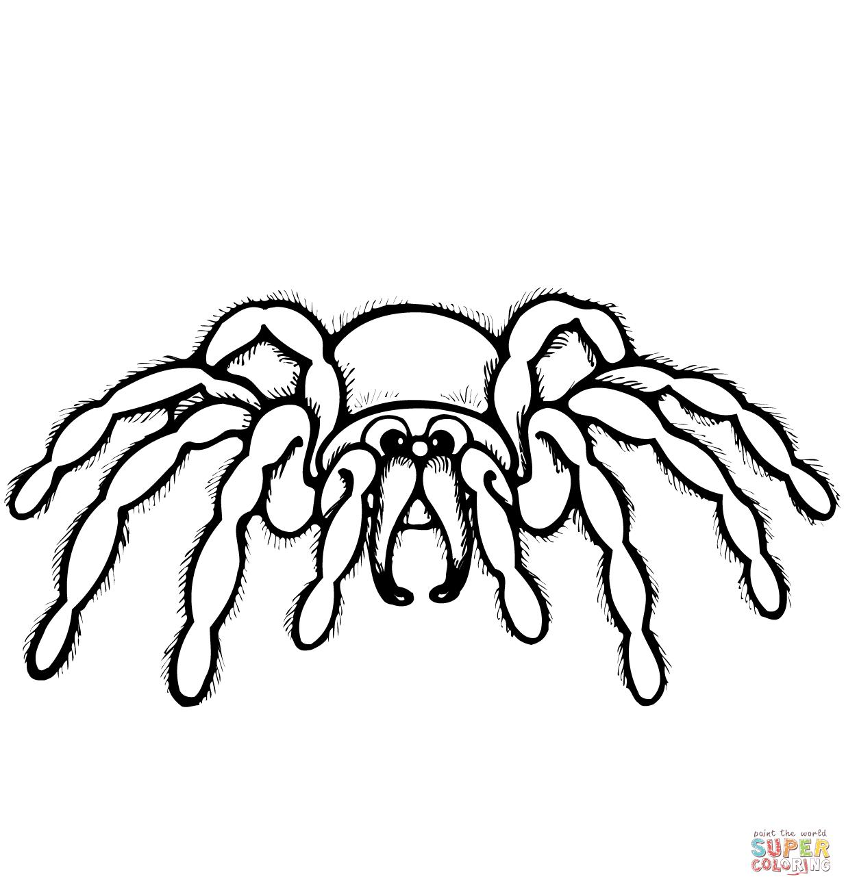 1545183392_cartoon-spider-coloring-page