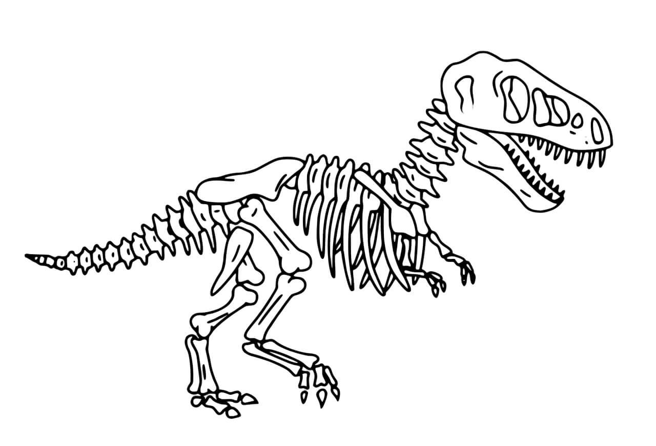 динозавры скелеты раскраски распечатать складывалась жизнь