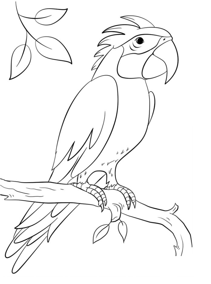 Sisserou Parrot On Branch