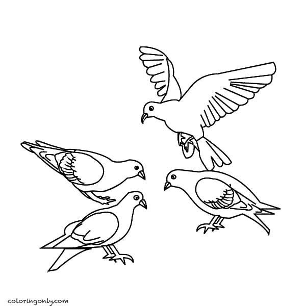 4 pigeons