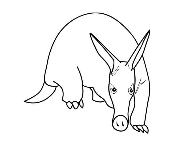 A Funny Aardvark