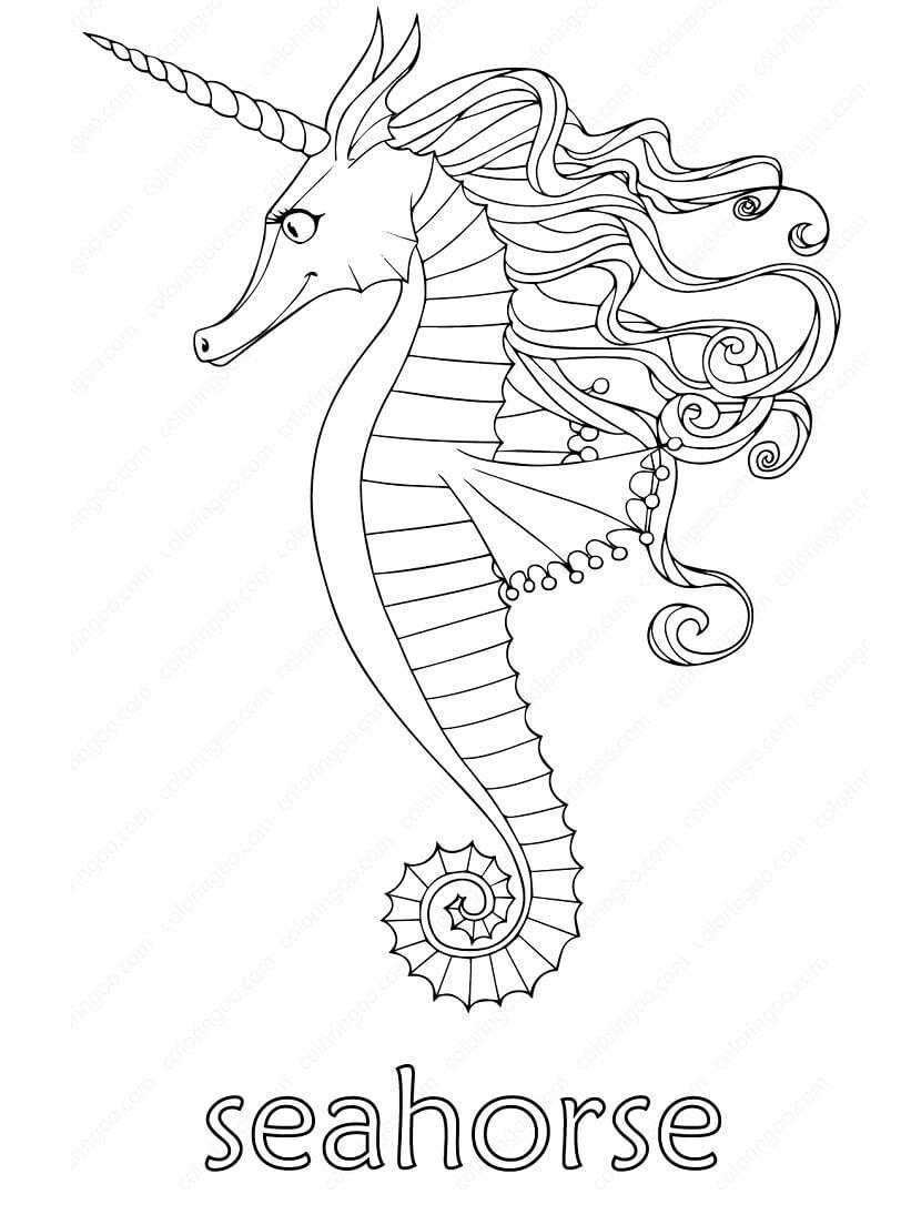 Amazing Seahorse