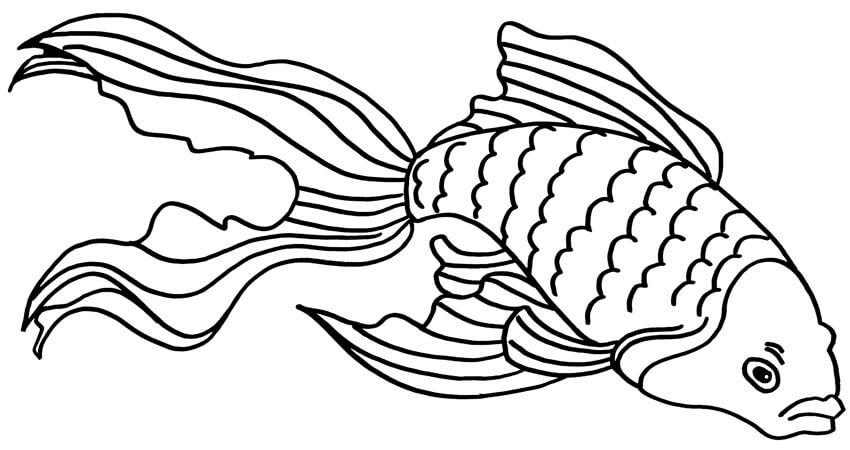 Angry Goldfish