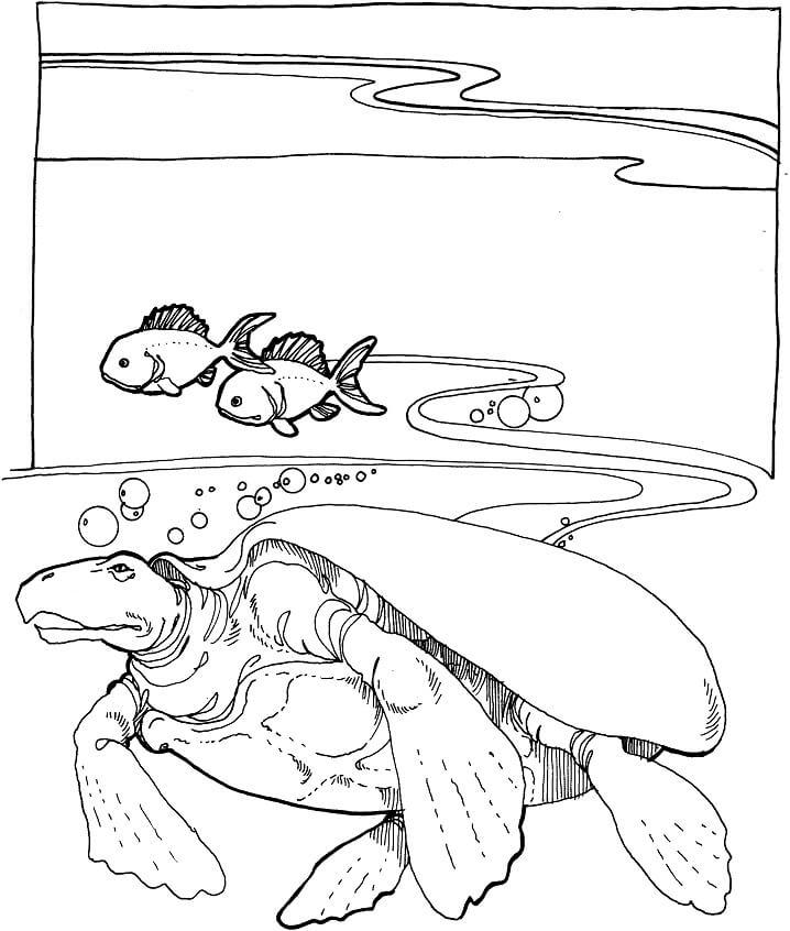 Archelon Extinct Sea Turtle