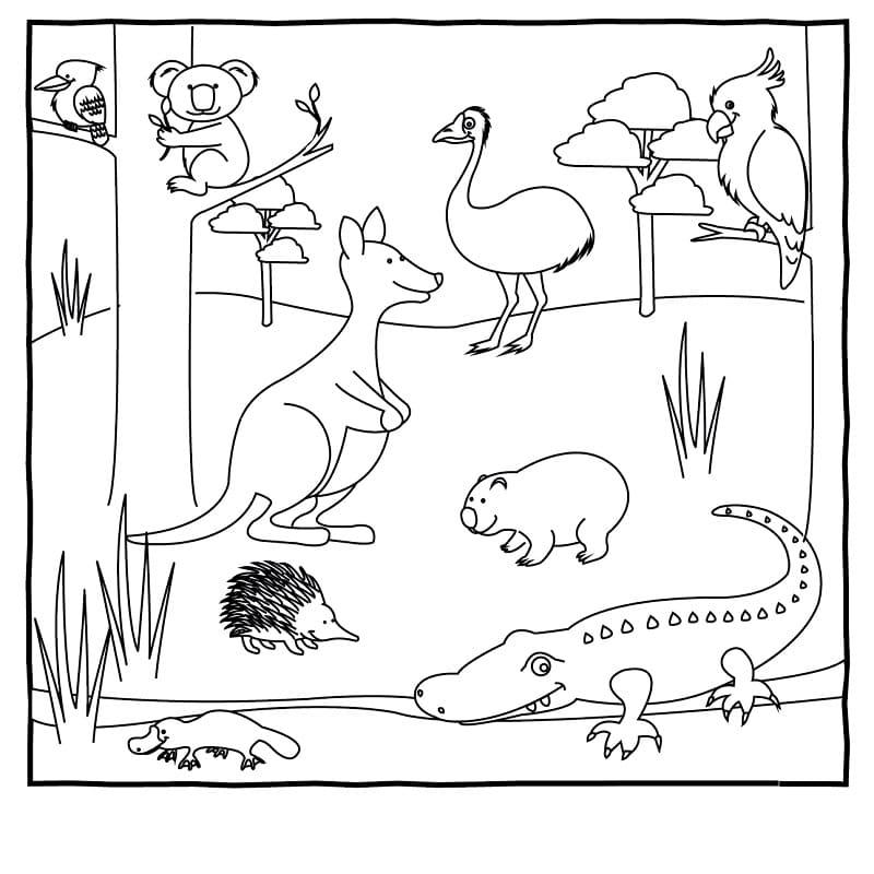Australia Animals 1