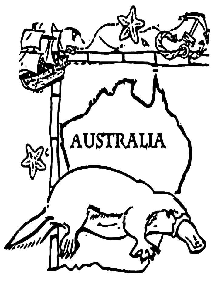 Australia Platypus
