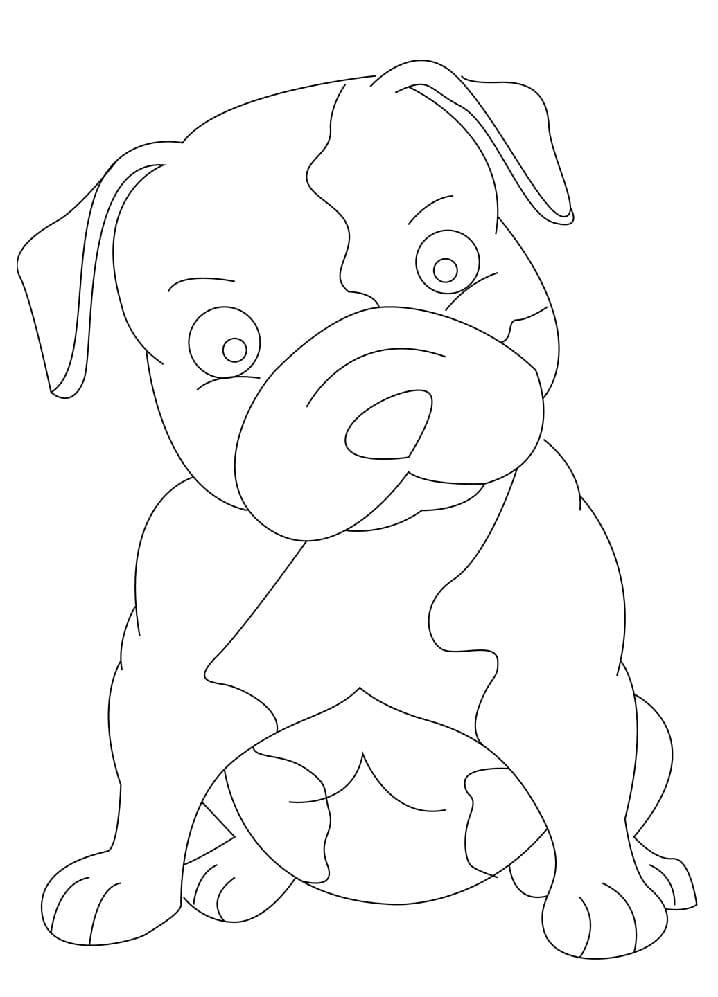 Baby Pitbull Dog