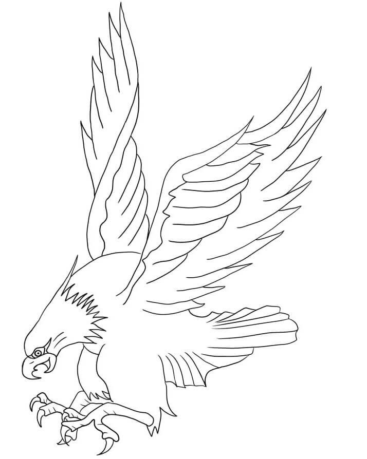 Bald Eagle Attacking