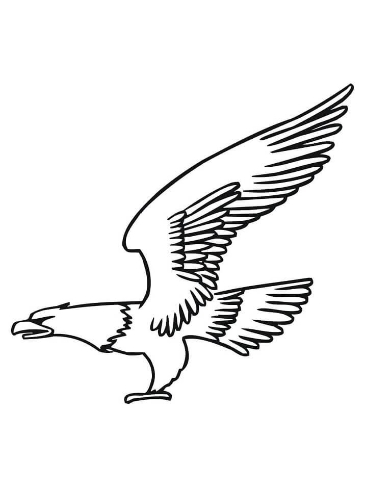 Bald Eagle Fly