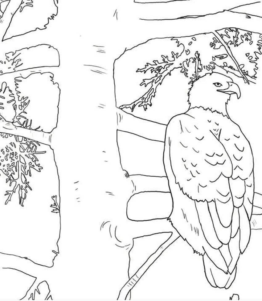 Bald Eagle on a Tree