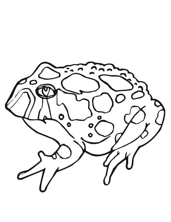 Beautiful Toad