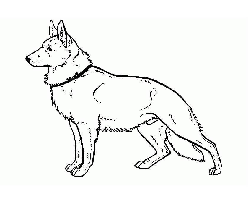 Cool German Shepherd