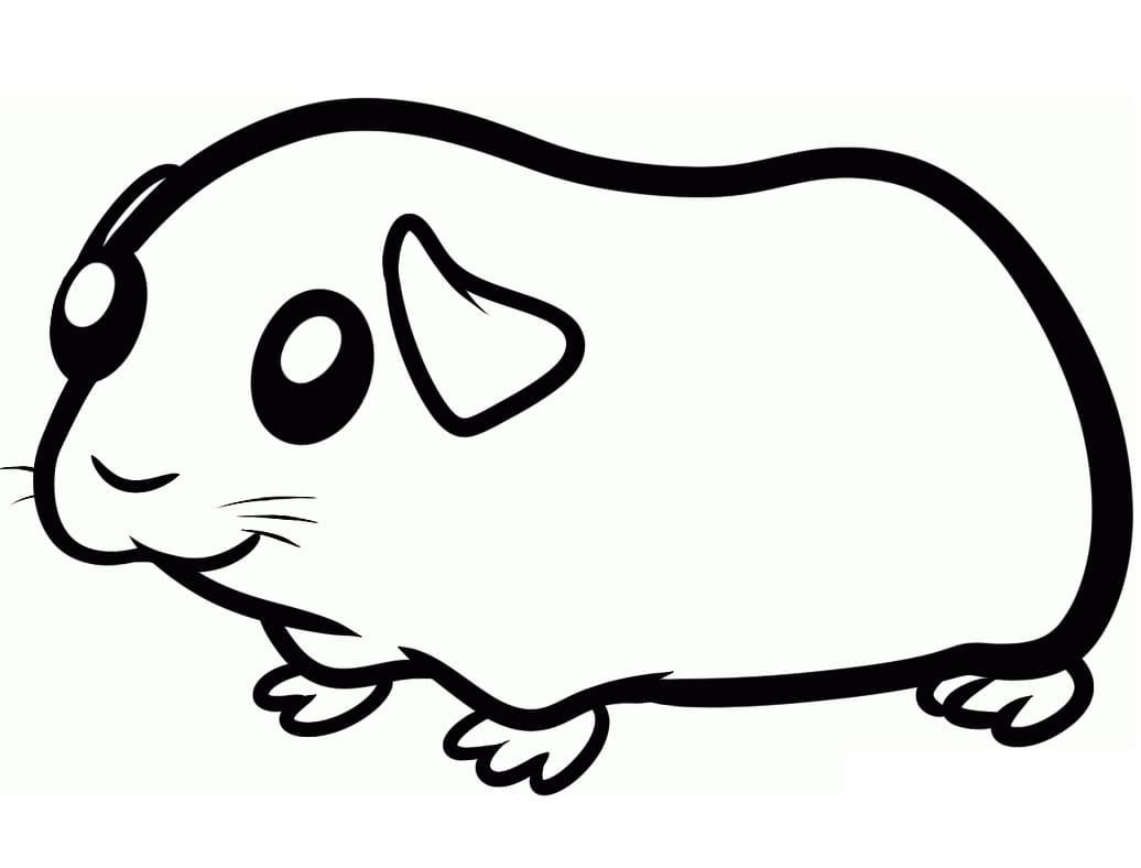 Cute Guinea Pig 3