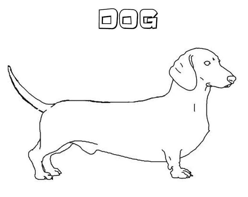 Dachshund Dog 1