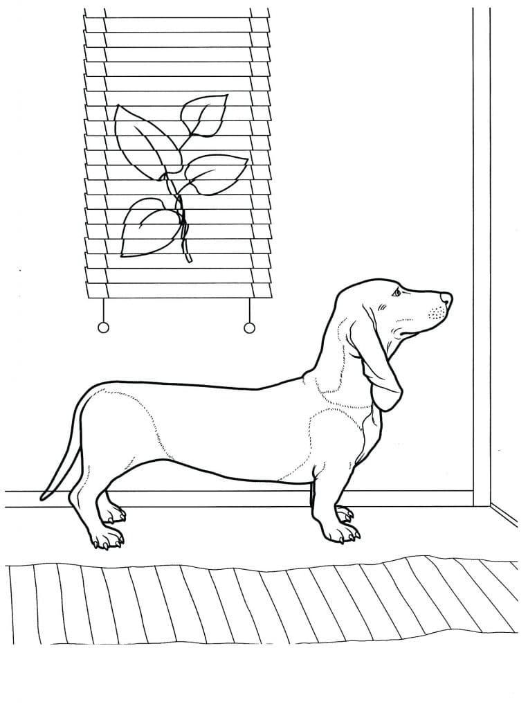 Dachshund Waiting at Door