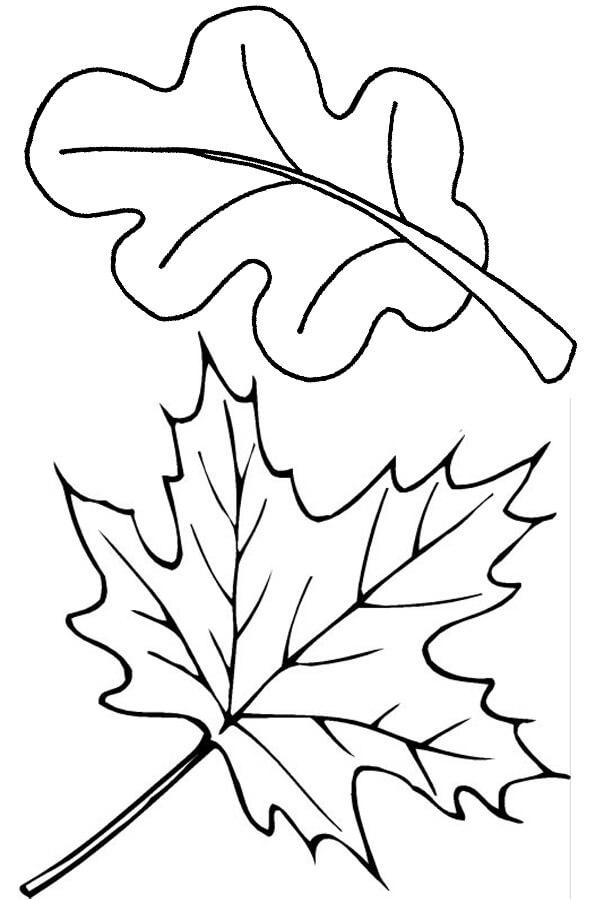 Fall Leaves 7