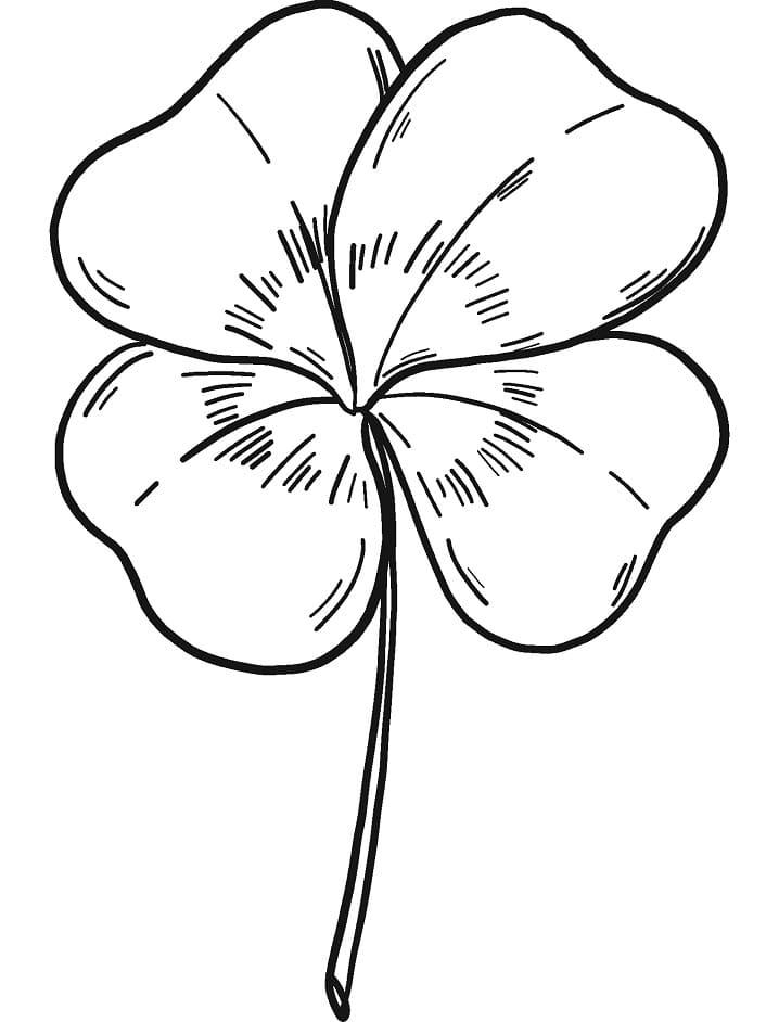 Four-leaf Clover 1