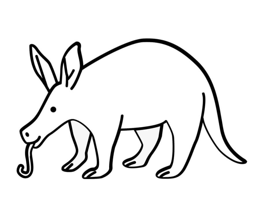 Funny Aardvark