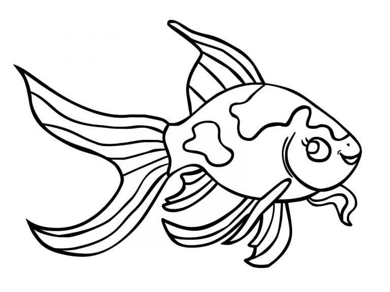 Funny Goldfish
