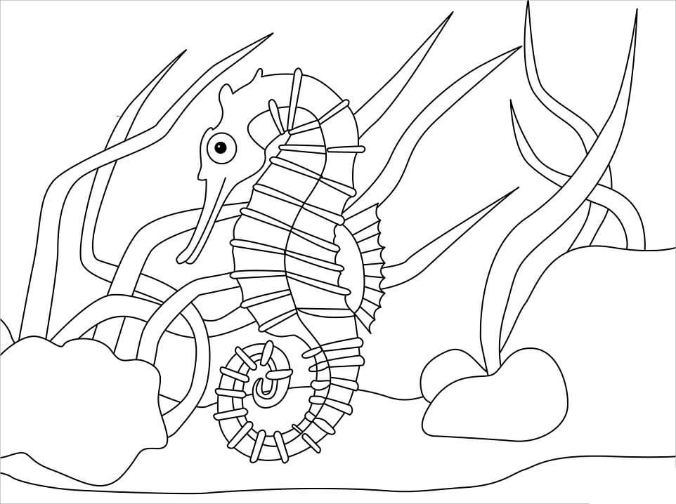 Funny Seahorse