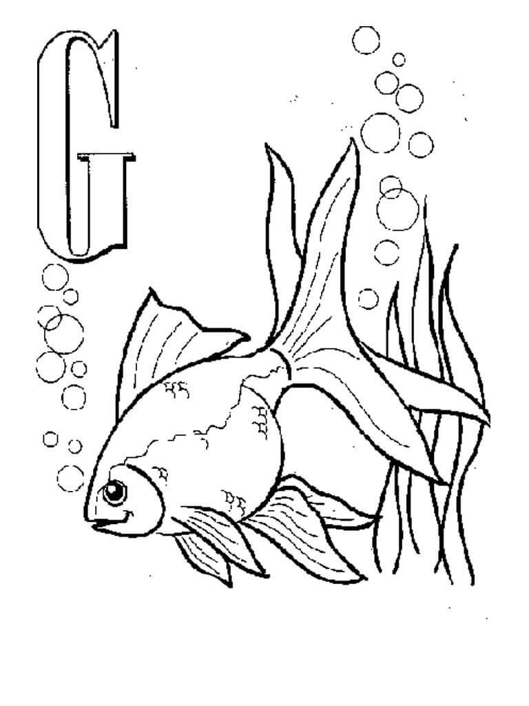 G-Goldfish